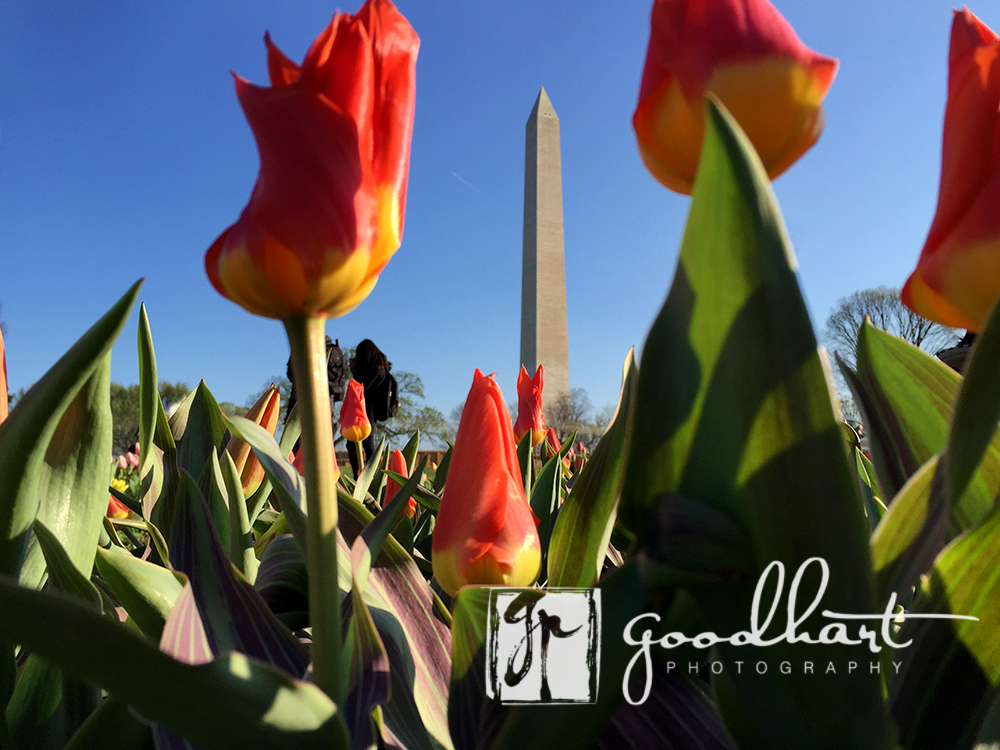 Worms Eye View of Washington Monument
